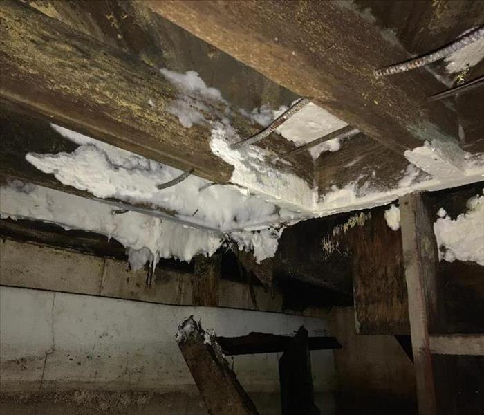 Mold Remediation Mold At Its Finest